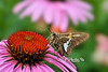 Moth on flower  to purchase - http://dan-friend.artistwebsites.com/featured/moth-on-flower-dan-friend.html