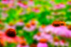 Field of flowers  to purchase  - http://dan-friend.artistwebsites.com/featured/field-of-flowers-dan-friend.html